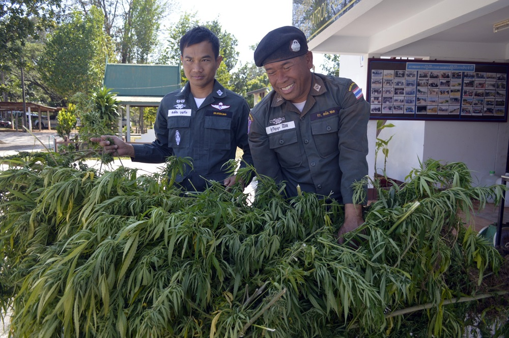 В Тайланд: Правителството произведе първата партида конопено масло
