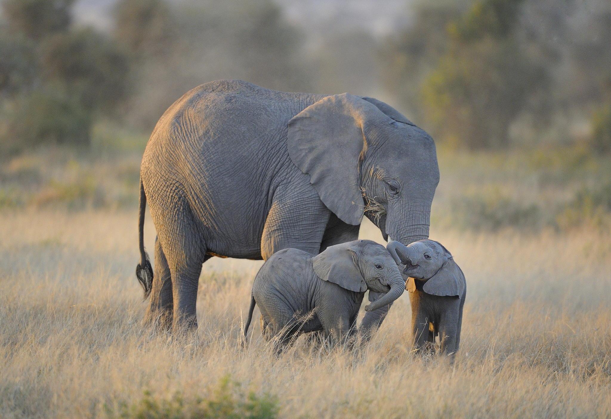 Слоновете в зоопарка на Варшава се хранят с медицински коноп срещу стрес
