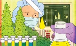 Лекарството канабис - какво е CBD