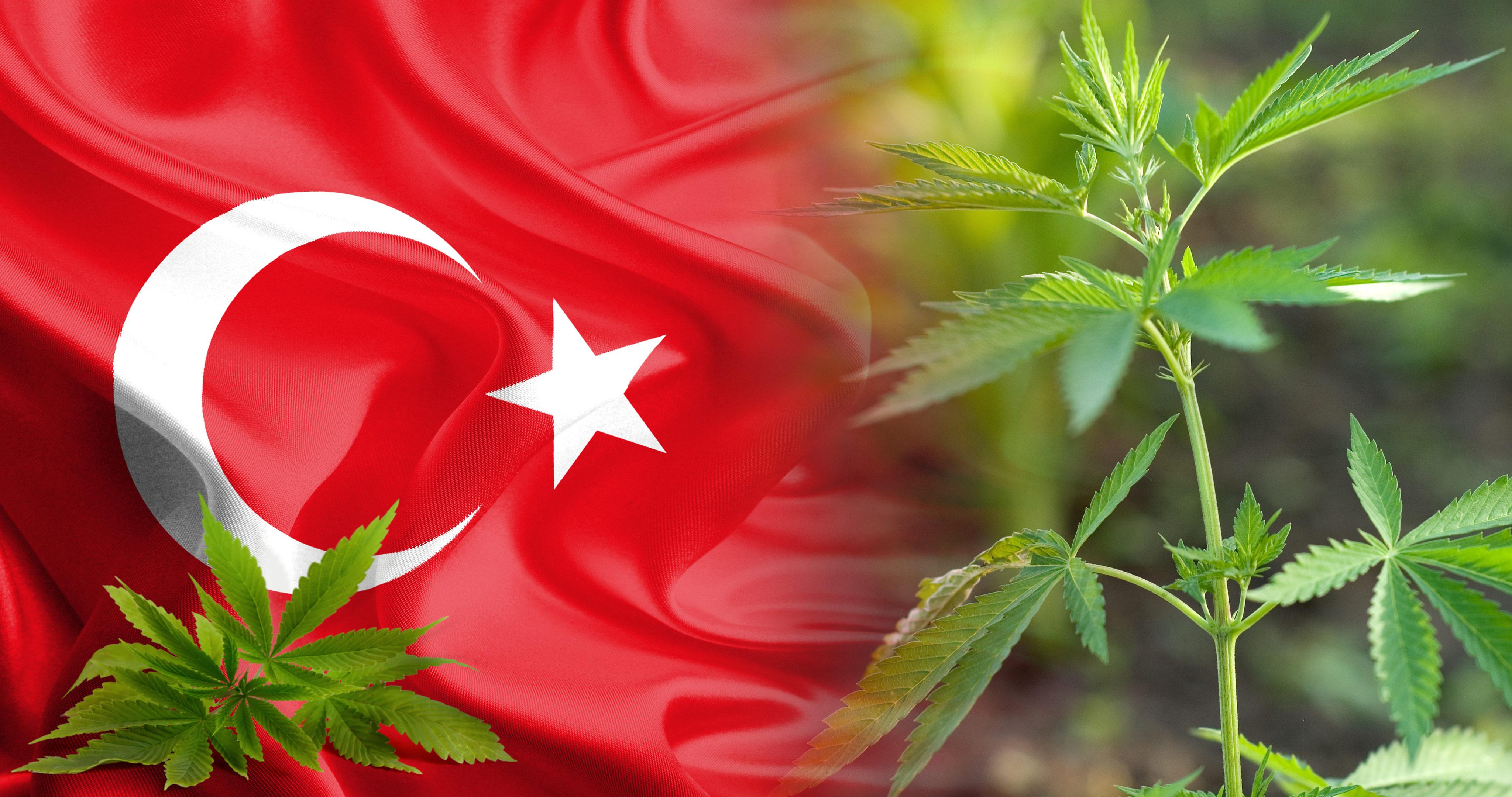 Турция легализира производството на канабис