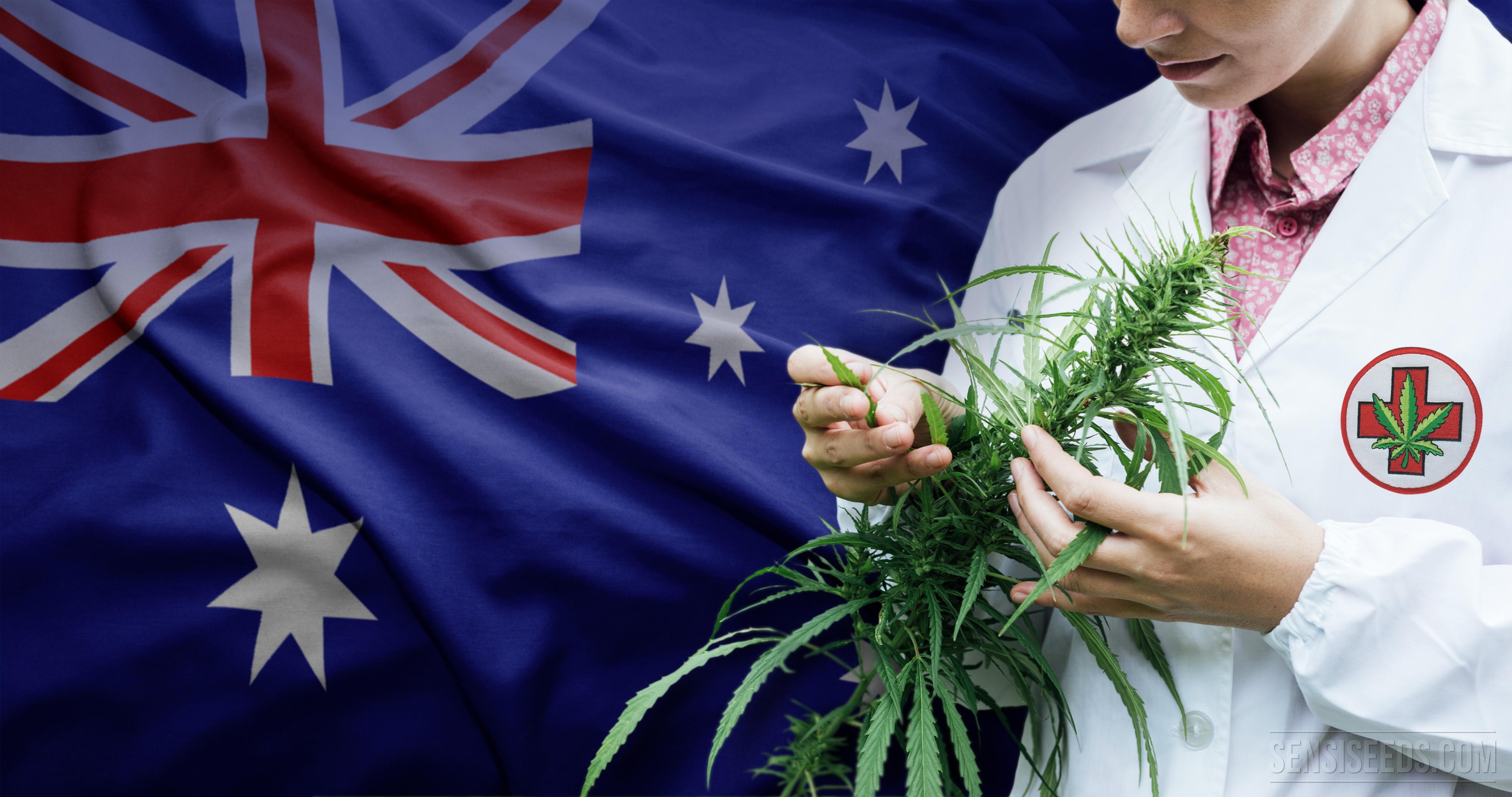 Разрешиха канабиса за медицински цели в Австралия