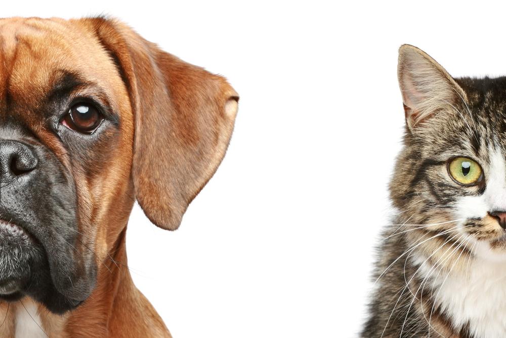 Котки, кучета и коноп