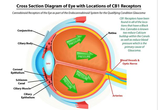 Лечение на глаукома с канабис