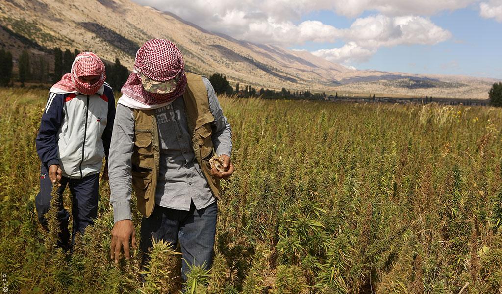 Новини от Близкия Изток: легализация на канабиса
