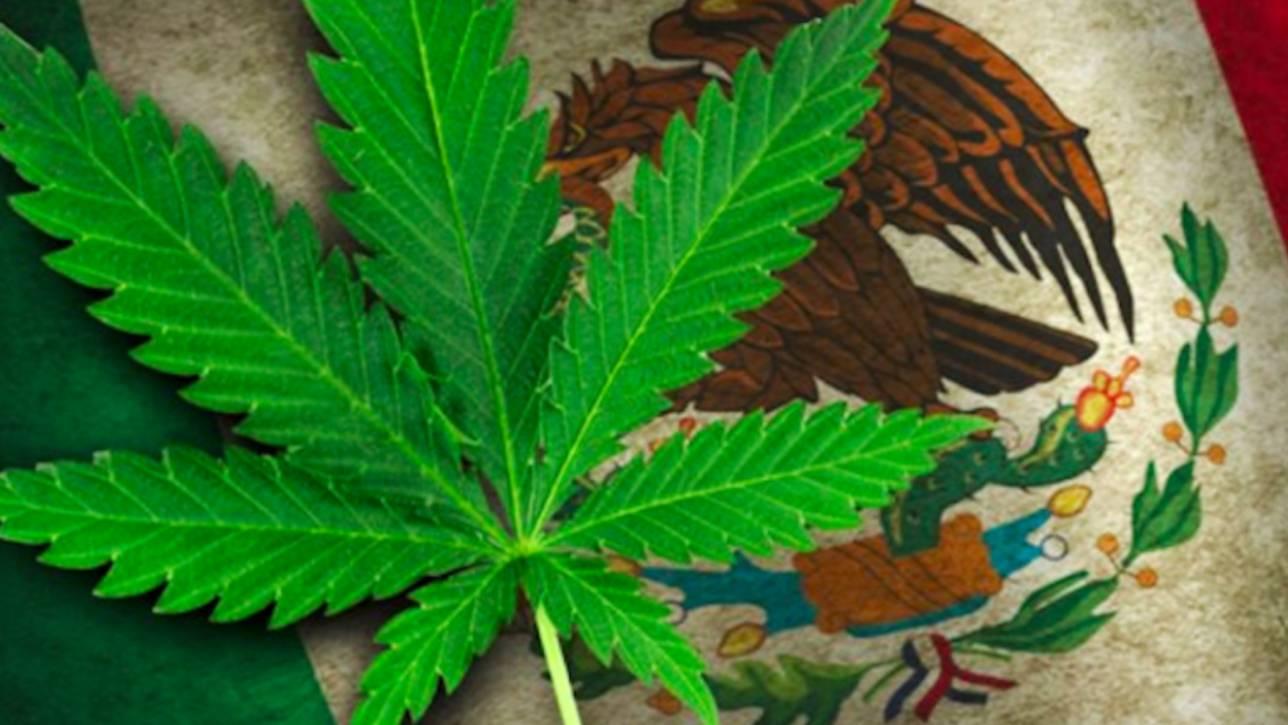 Мексико пред легализация на канабиса?