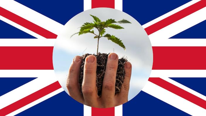Американски канабис скоро в Англия?
