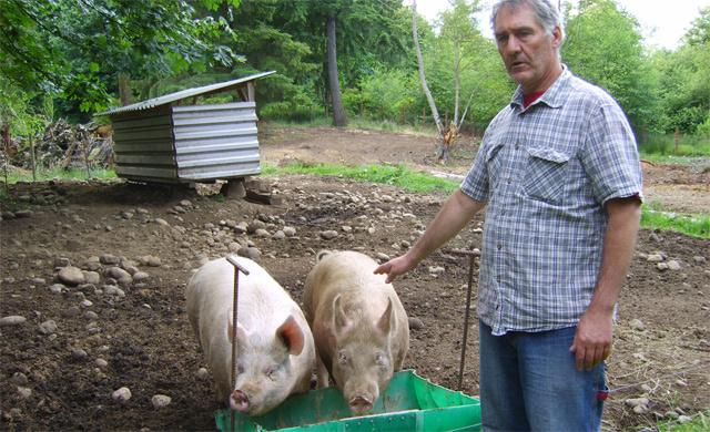 Фермер храни животните си с коноп