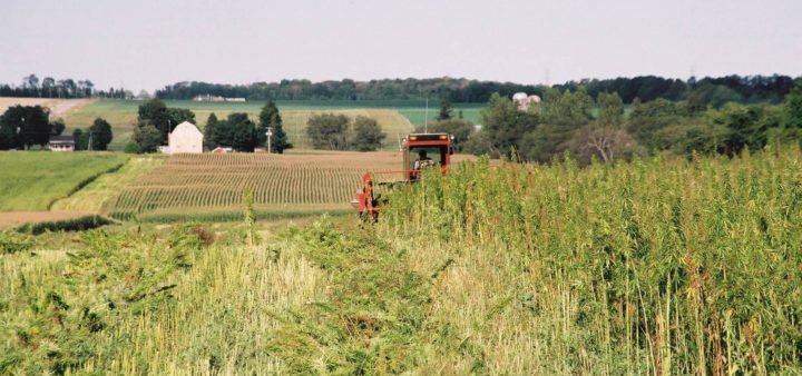 Фермер възражда конопената индустрия в Плевен