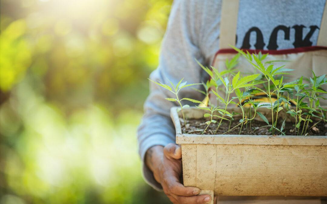 Зеленото решение за куп екологични проблеми