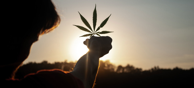 ООН: Канабисът вече не е опасен наркотик