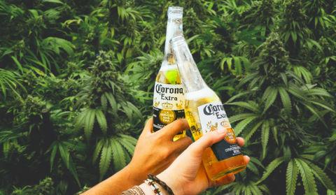 Corona влиза в бизнеса с канабис