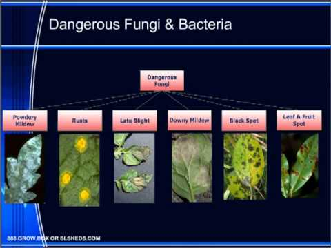 Диагностика на заболявания по растенията