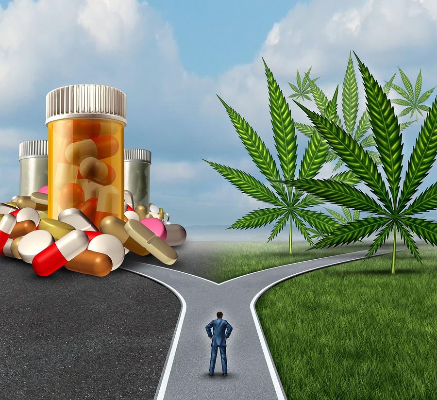 Дрога или лекарство - терапевтична употреба на канабиноиди и терпени