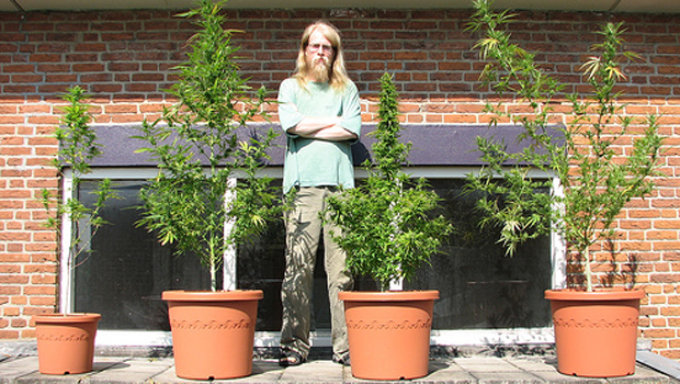 Холандия ще легализира отглеждането на канабис