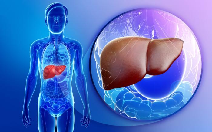 Изследване: Канабидиолът предпазва черния дроб