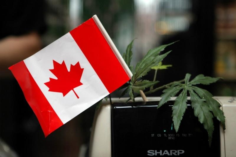 Канада ще легализира употребата на коноп през 2018