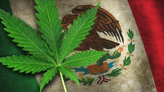 Мексиканските депутати легализираха канабиса за медицински цели