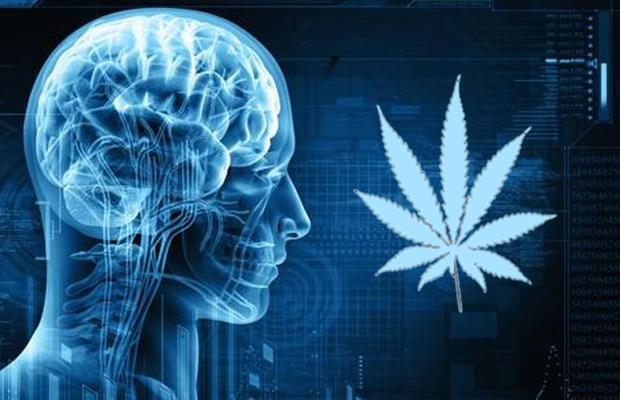 Ефектите на конопа върху подрастващия мозък
