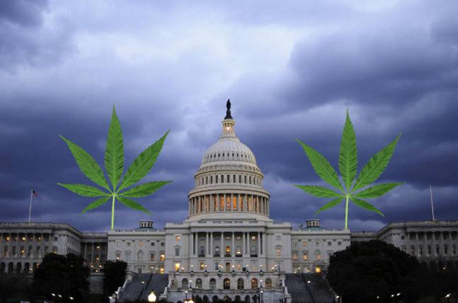Градският съвет на Вашингтон декриминализира марихуаната