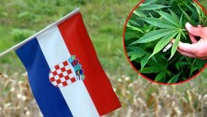 Хърватия легализира конопа за медицински цели
