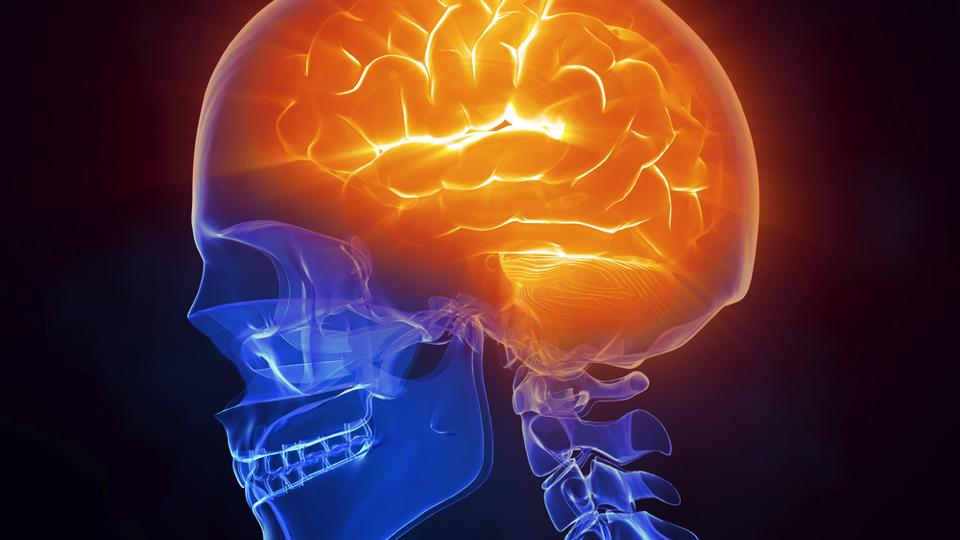 Изследване свързва ендоканабиноидната система с регулирането на съхранение на енергия в мозъка и невронните функции