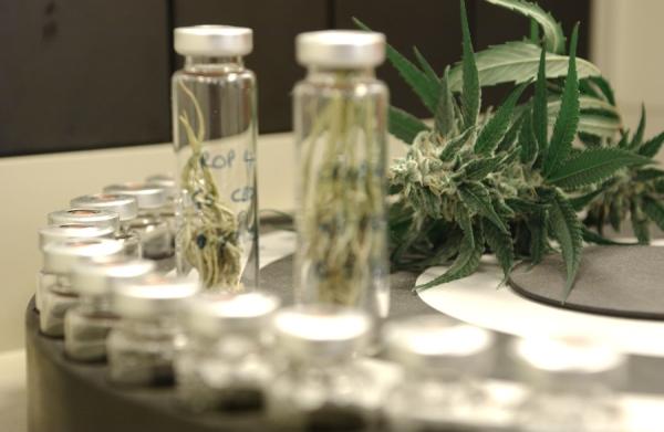 Каталуния на път да легализира медицинския канабис