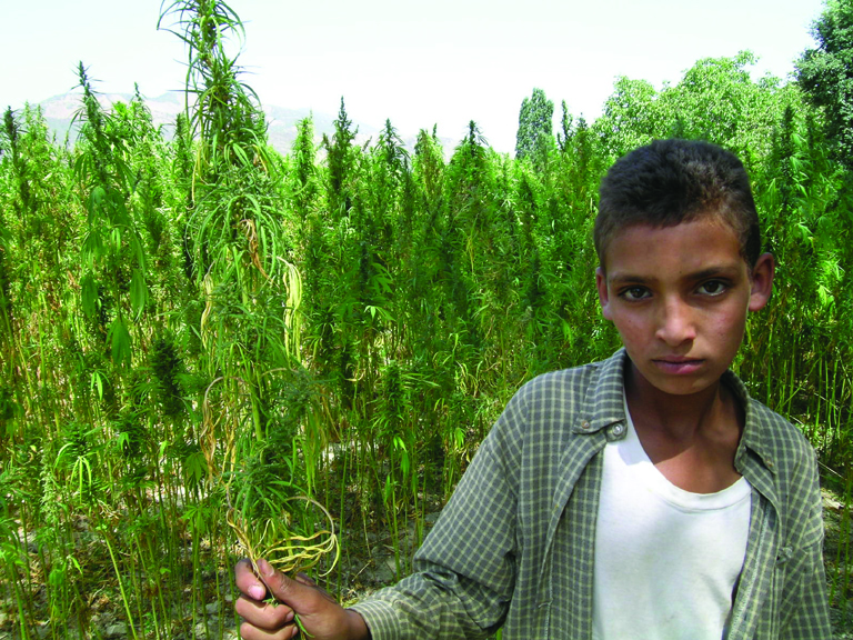 Конопените ферми в Мароко може да станат легални