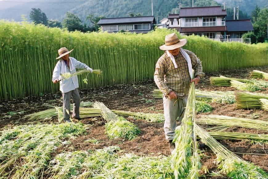Конопът - влакното на Япония
