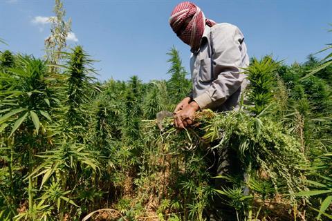Производители на канабис в Ливан се присъединяват към битката срещу Ислямска държава