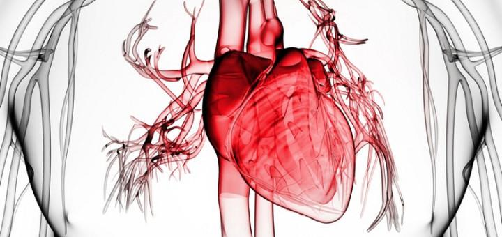 Конопът помага при хронична сърдечна недостатъчност