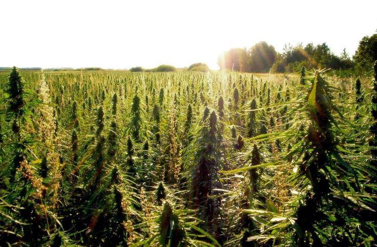Неефективността на борбата с наркотиците и възможните решения
