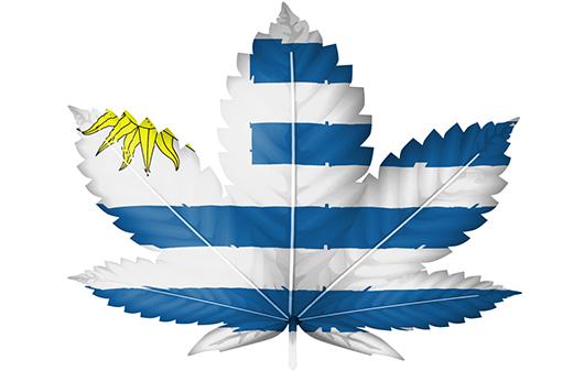 Новият президент на Уругвай продължава с приложението на канабис политиката на страната