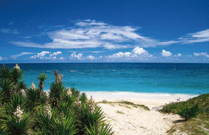 Островната Бермуда настоява за незабавна декриминализация на канабиса чрез исторически доклад