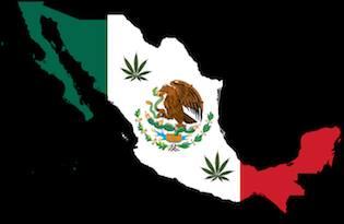 Правителството на Мексико клони към легализация на конопа