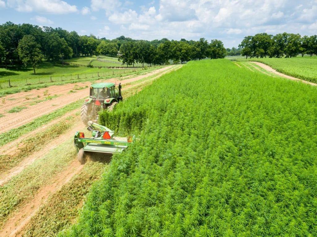 Разрешение за отглеждане на коноп в България вече по електронен път