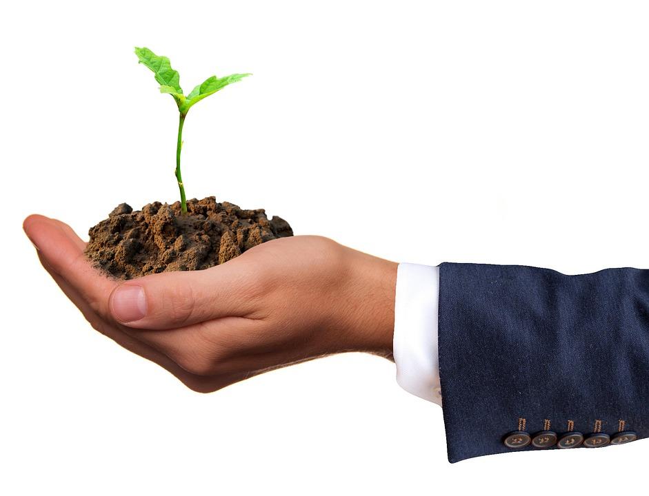 Конопът като решение срещу обезлесяването