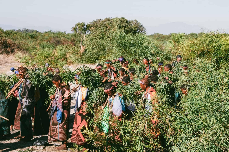 Малко африканско кралство иска да изнася коноп в целия свят