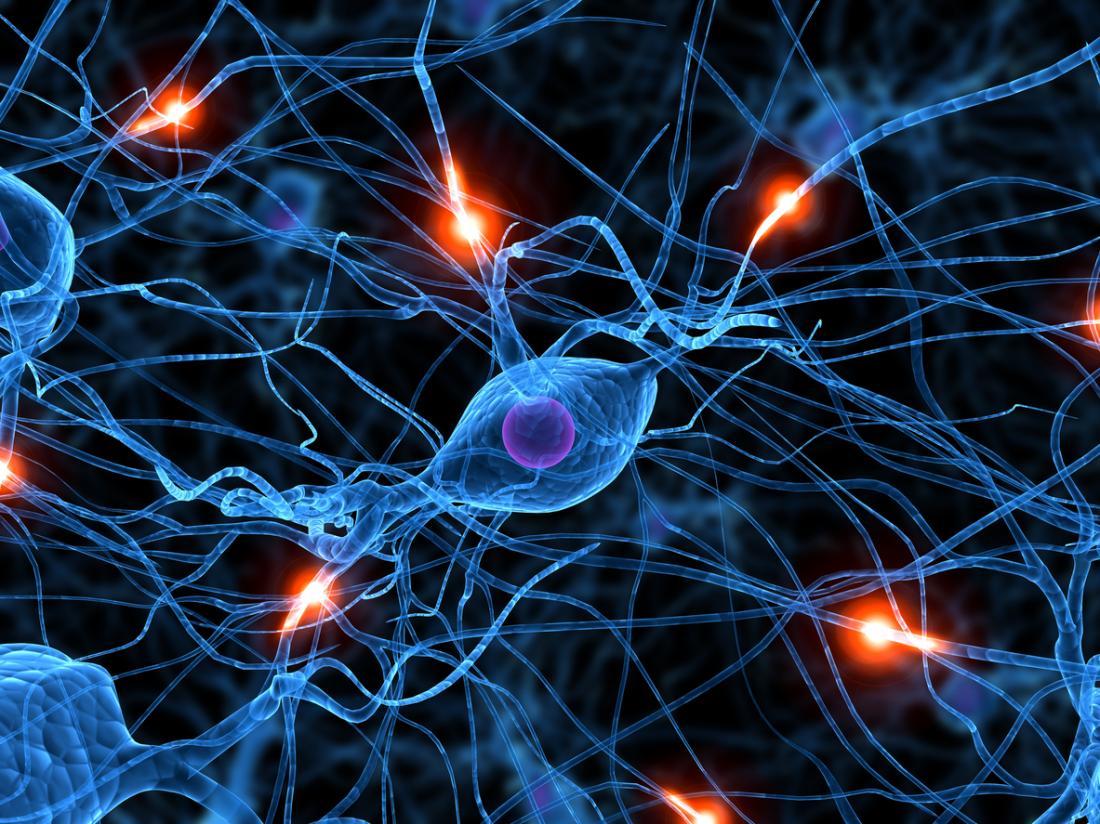 Канабисът и производството на мозъчни клетки