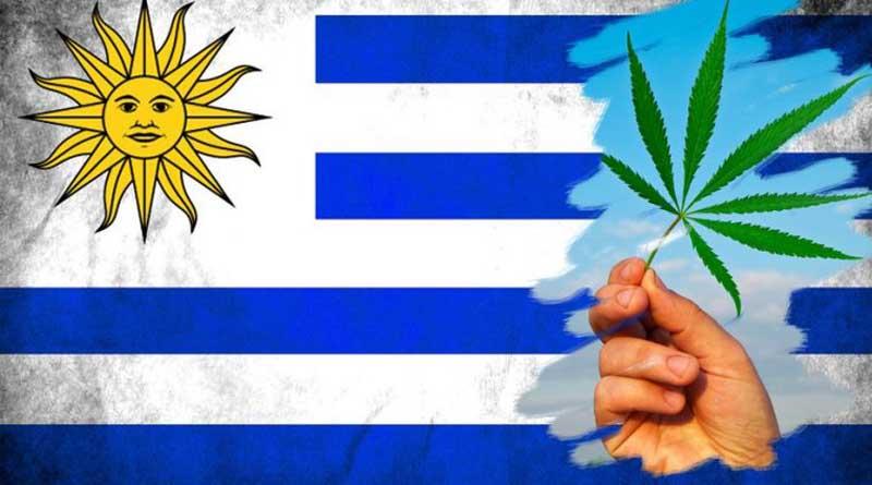 Експеримента на Уругвай с канабиса