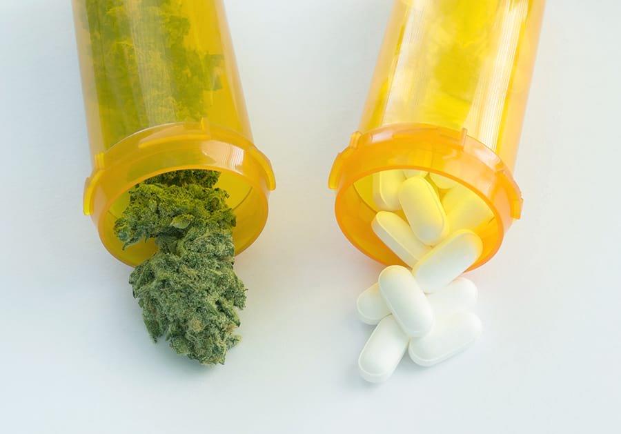 Легален канабис в битката срещу фармацевтичните опиати